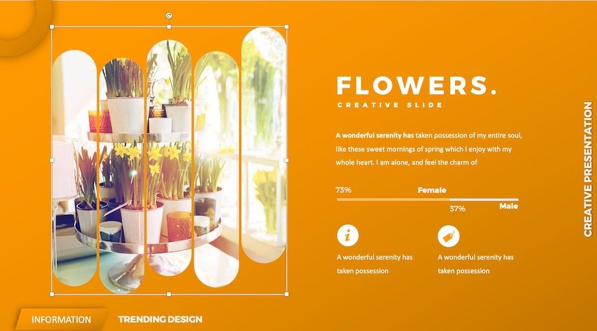 flower ppt - insert image