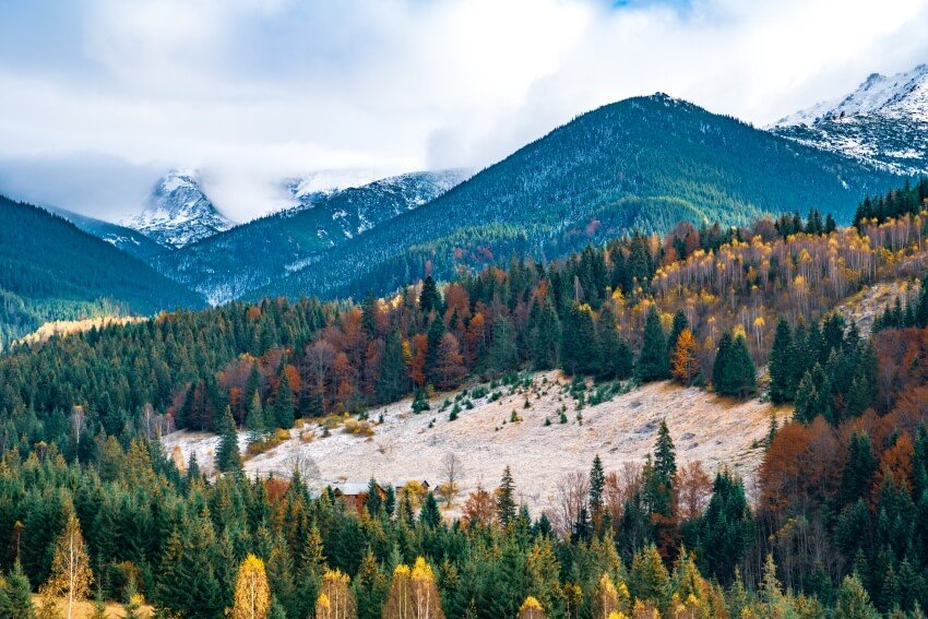 earth day ideas for work - deforestation is a growing problem