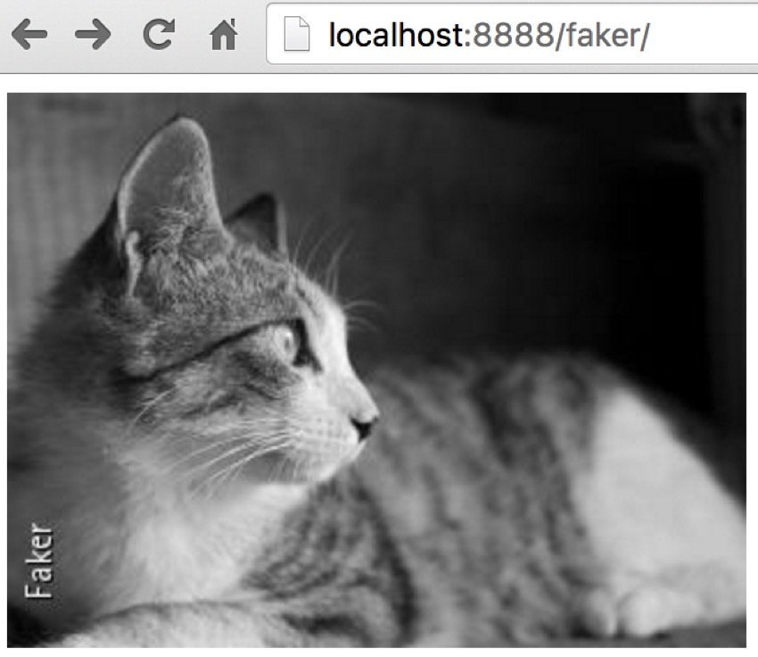 Using Faker Images of Cats