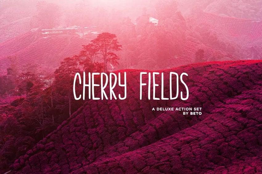 Cherry Fields Action