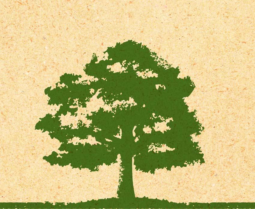Illustration of a chestnut tree