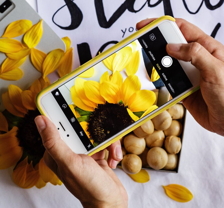 Person photographing cut sunflowers on a white tabletop, using a mobile phone