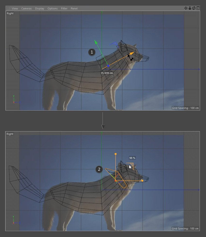 Modelling the fur of the neck