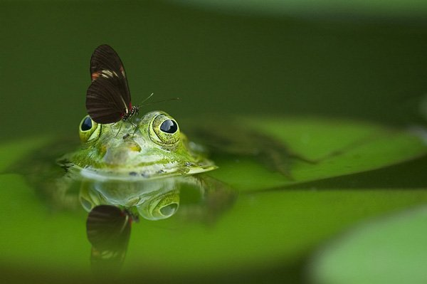 frog with butterfly