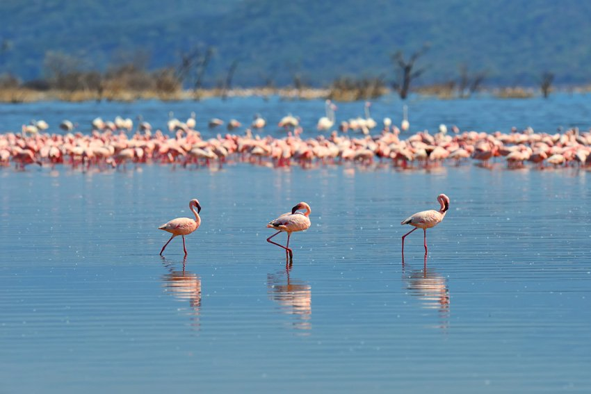 Flock of flamingos by Byrdyak available on Envato Elements