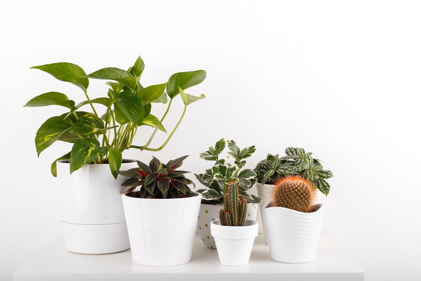 House Plants - available from Envato Elements