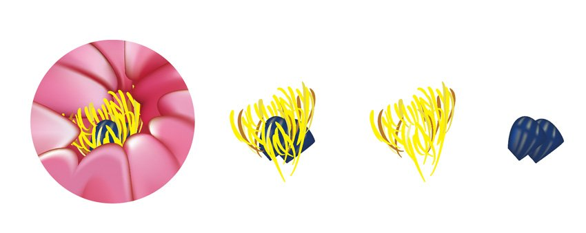 How to Draw Traditional Chinese Art in Adobe Illustrator Flower Stamen