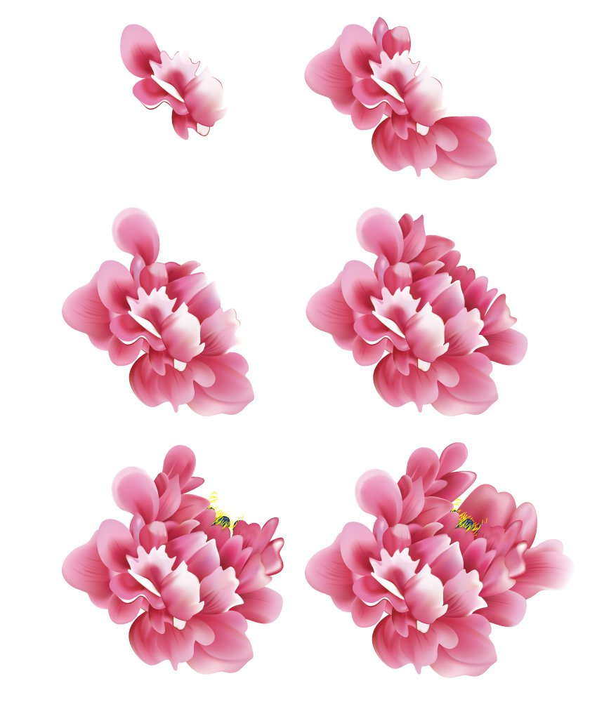 How to Draw Vector Chinese Flowers Peony Group Overview
