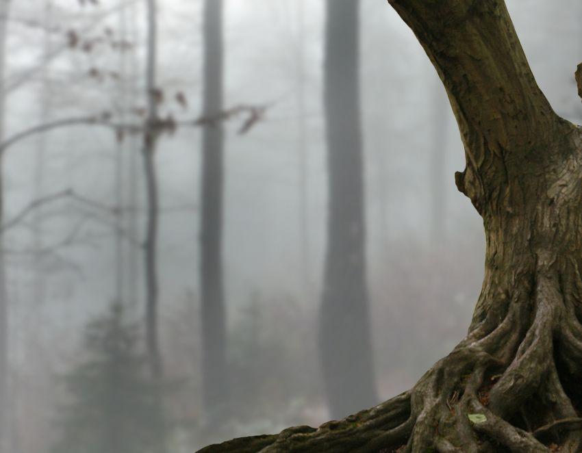 flip tree