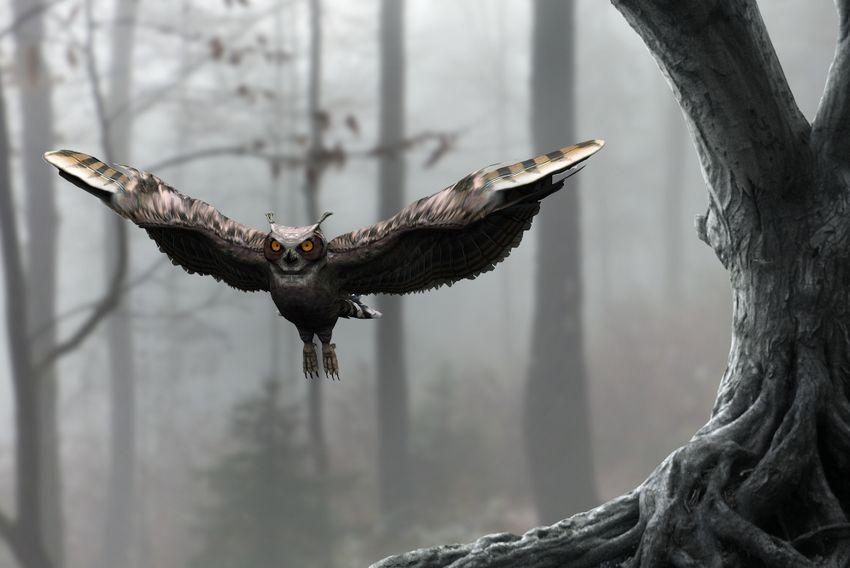add owl
