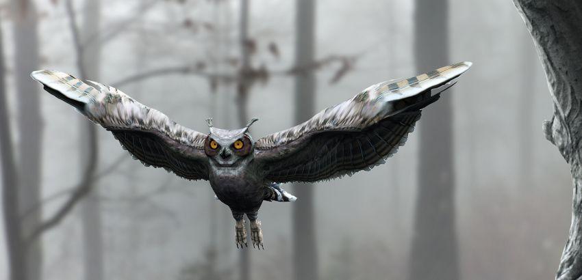 owl DB result