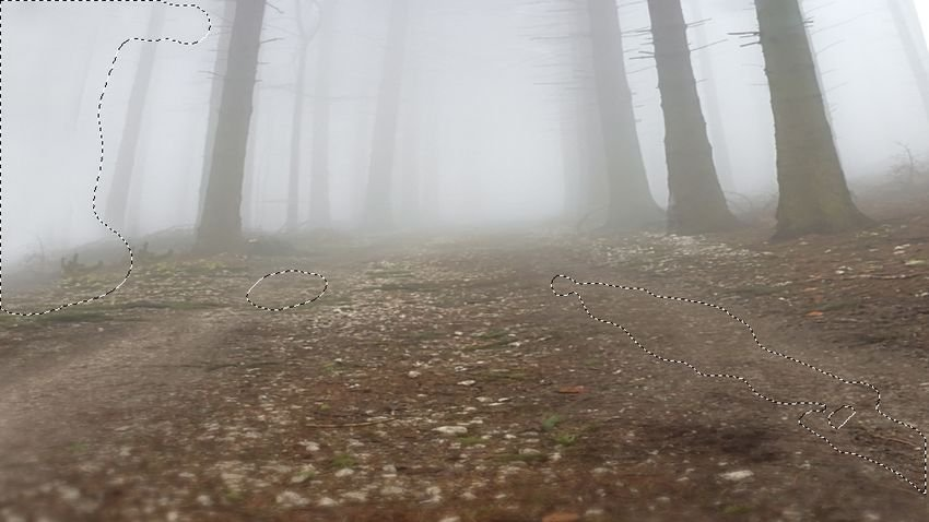 forest cloning