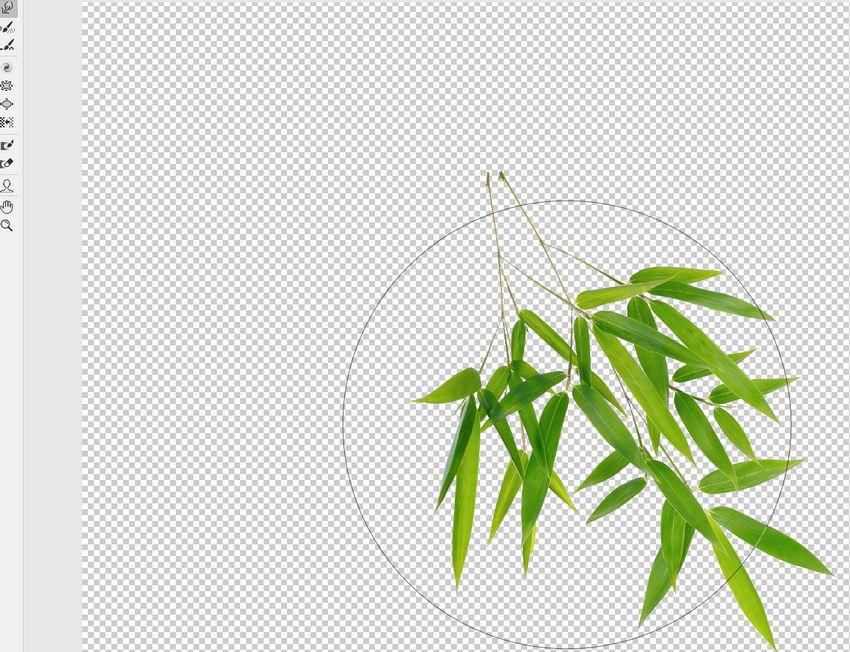 branch liquify