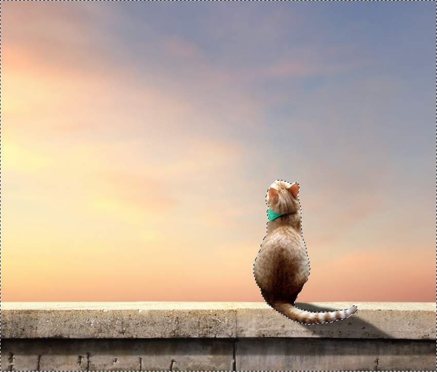 cat selection invert