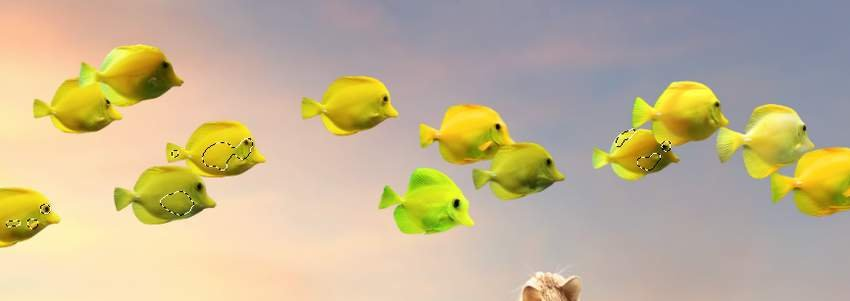 fishes cloning