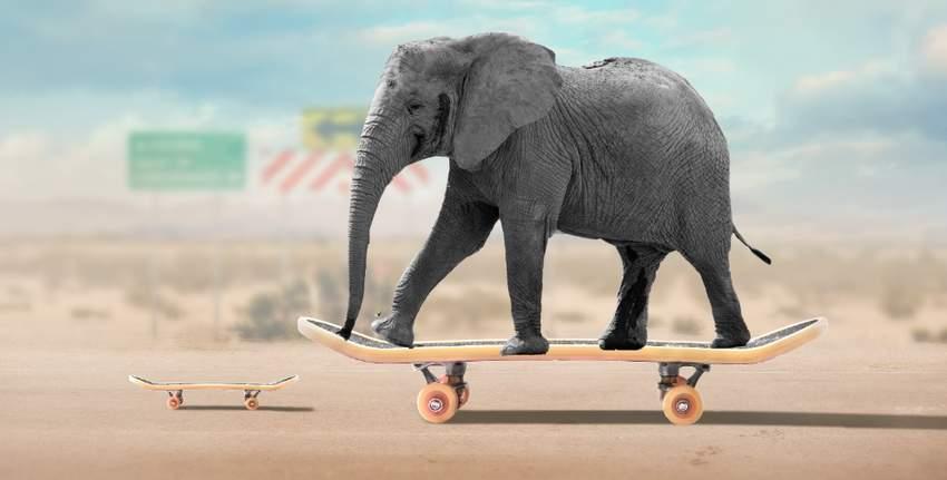 add elephant