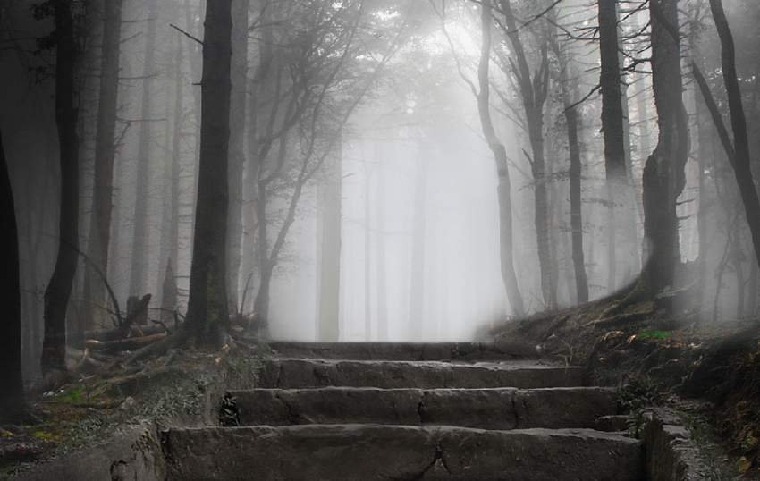 forest 3 masking