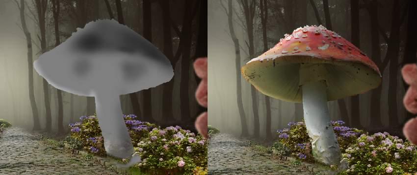 mushroom DB