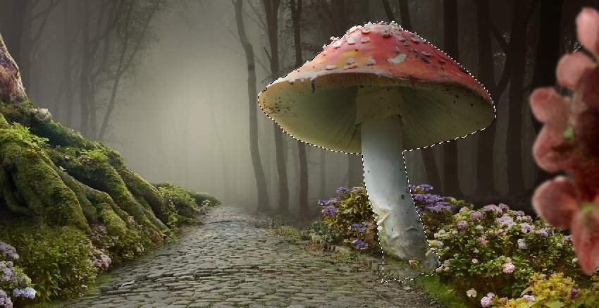 mushroom 1 selection