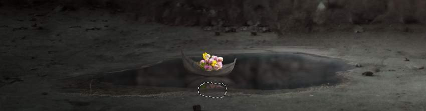 flowers reflection