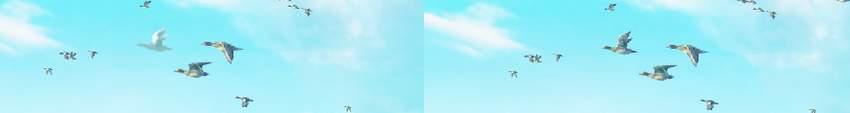 boat photomanipulation - birg bird dodging