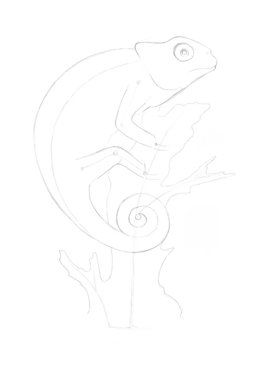 Outlining the shape of the tree