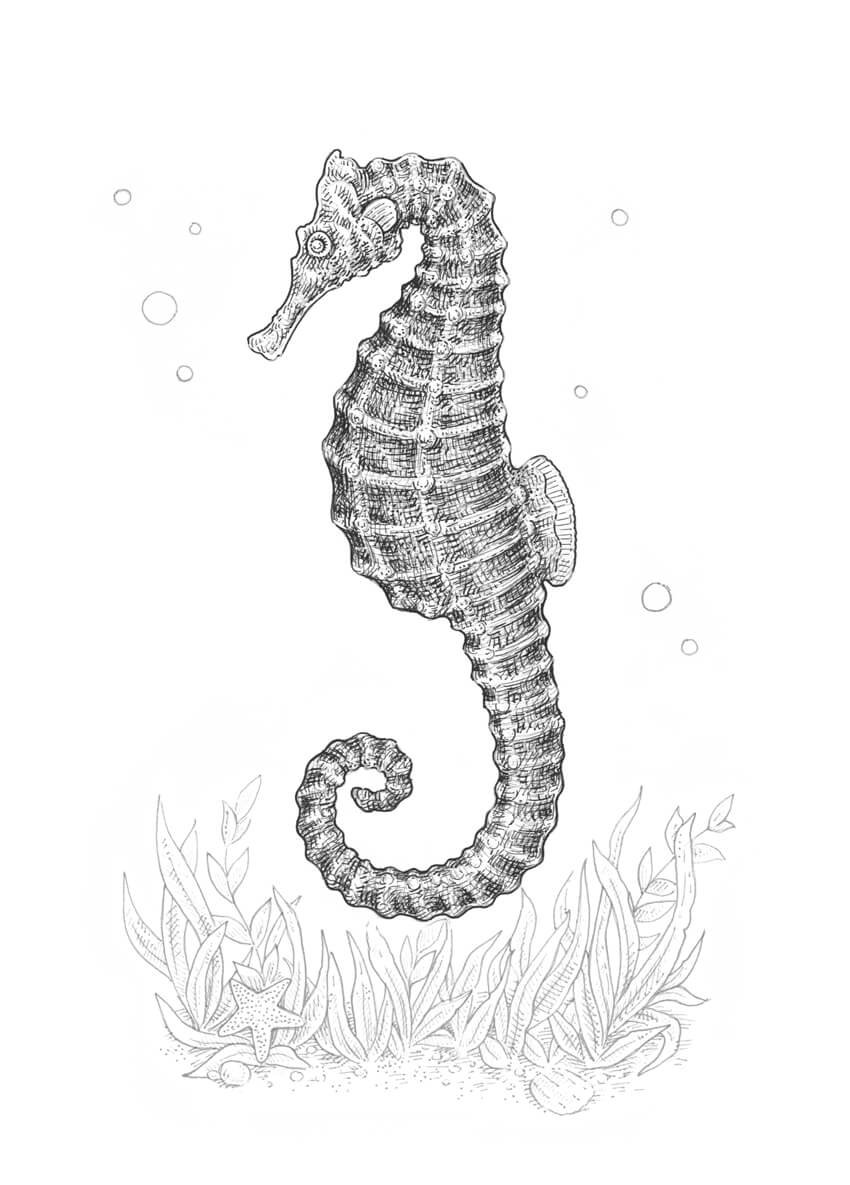 Making the seahorse more three-dimensional