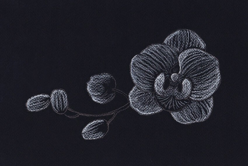 Drawing with the white pencil