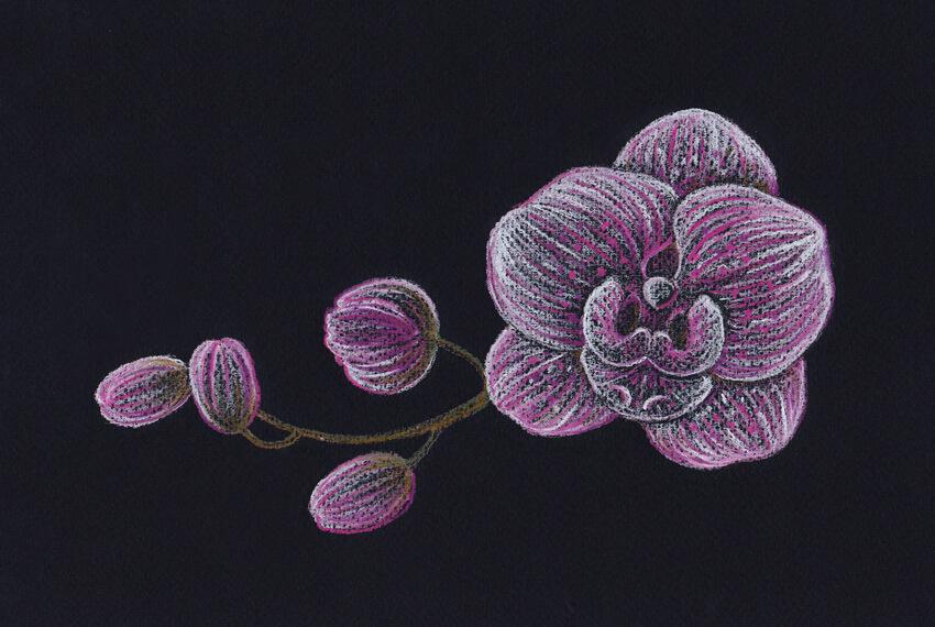 Adding the dark violet drawing