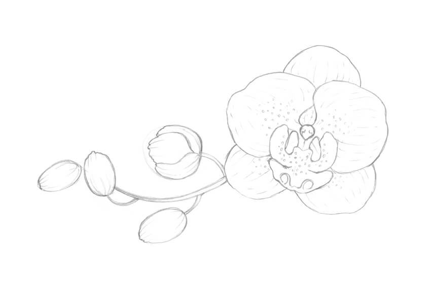 Adding the pattern of the orchid