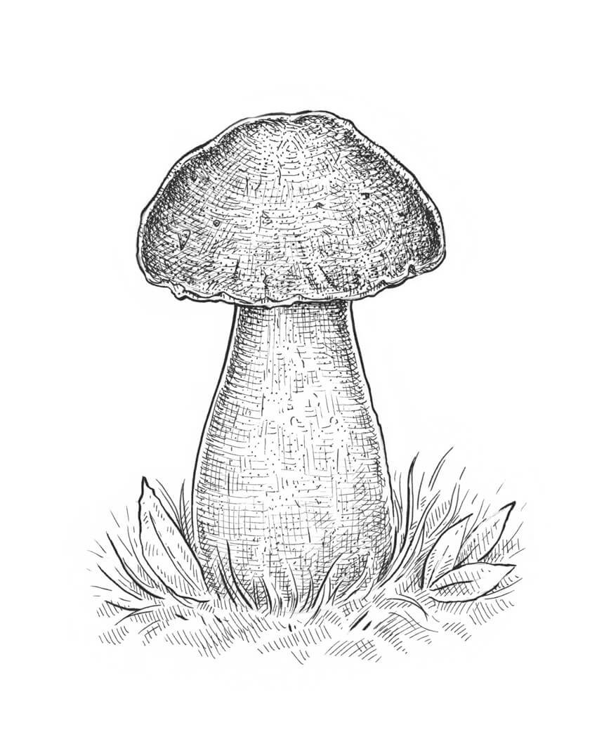 Working on the contrast and three-dimensional look of the boletus