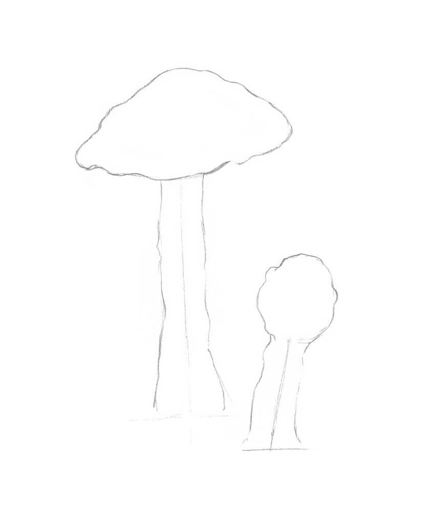 Refining the shapes of the mushrooms