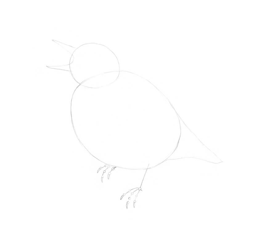 Drawing the tail