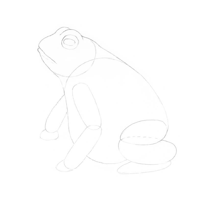 Drawing the body of the frog