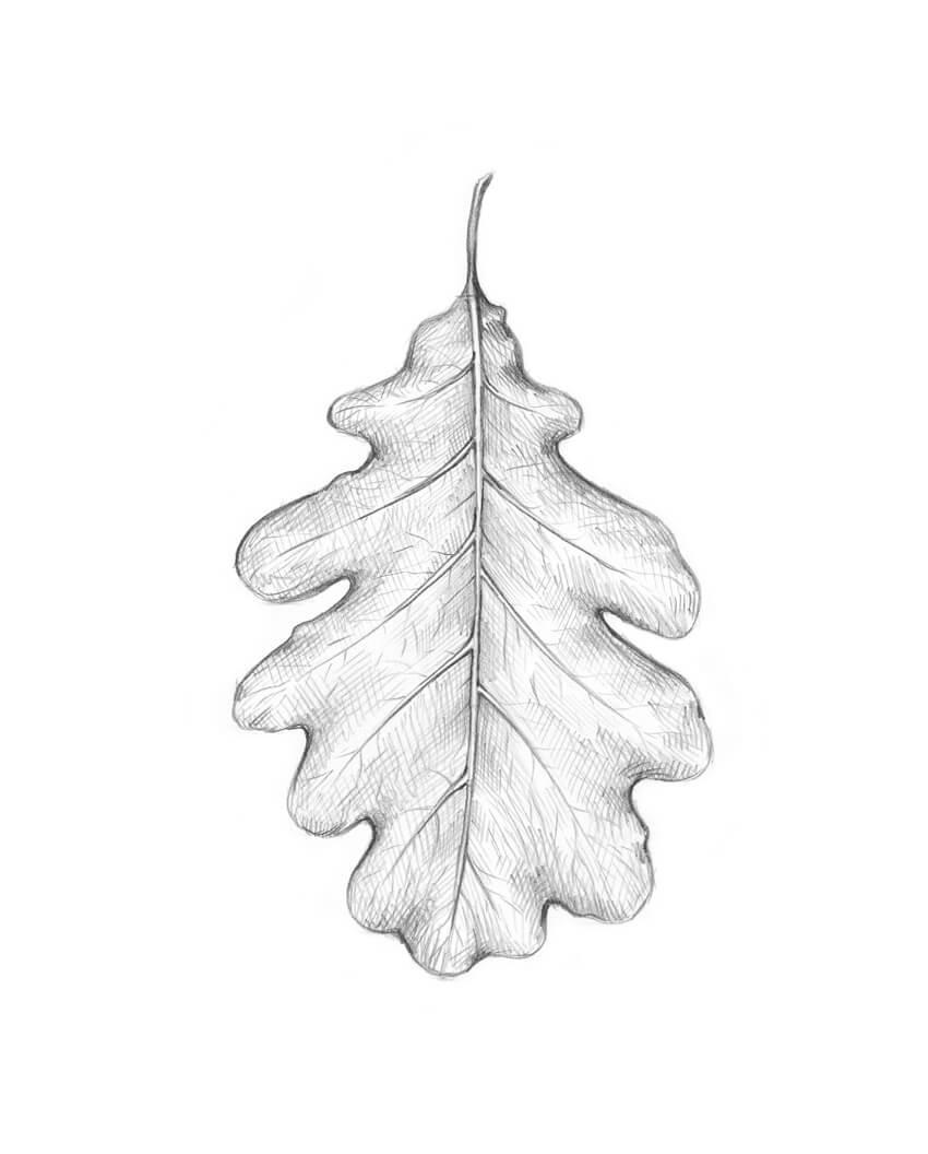 Completing the oak leaf drawing