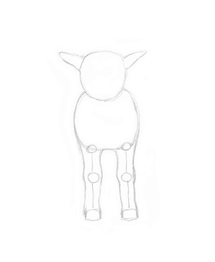 Drawing the fore legs