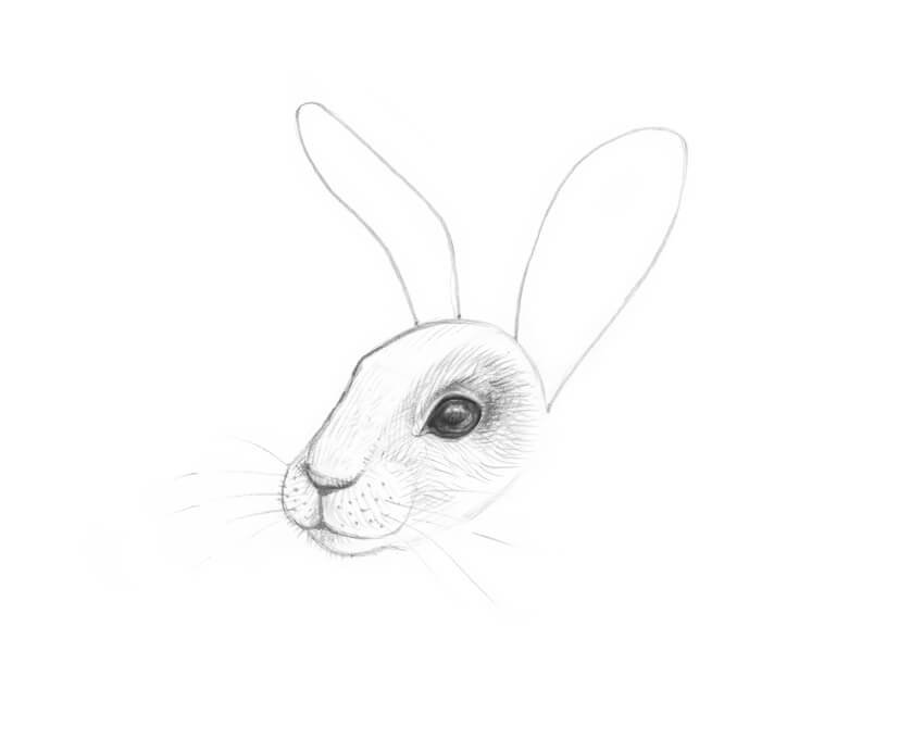 Drawing the rough shapes of the ears