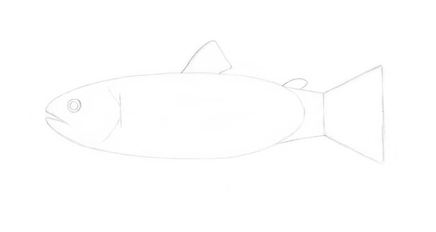 Adding the adipose fin