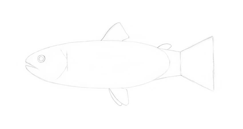 Adding the ventral fins
