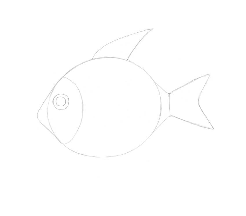 Drawing the first segment of the front dorsal fin