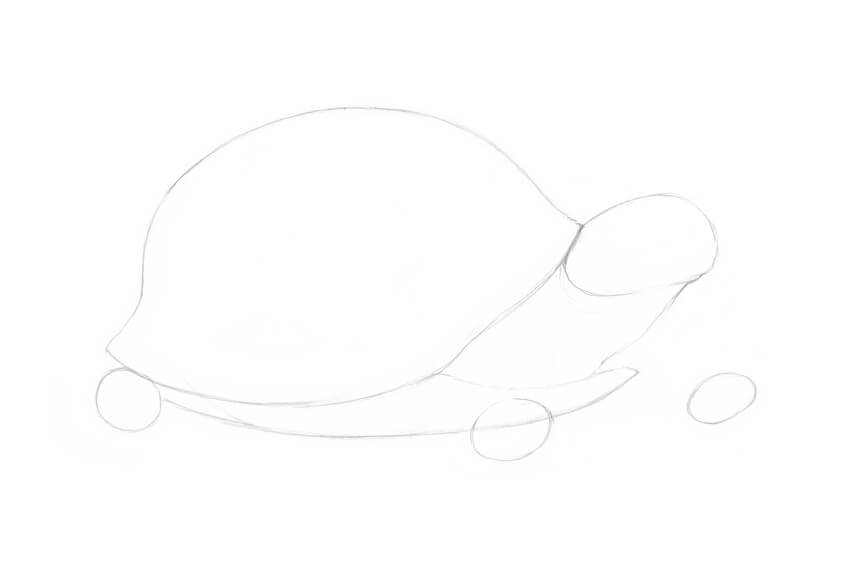 Drawing the head of the turtle