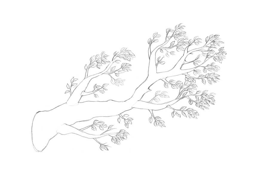 Drawing the leaves
