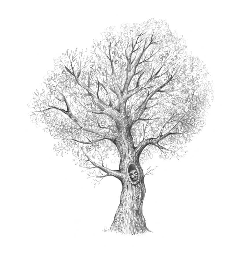 Darkening the trunk with a soft pencil