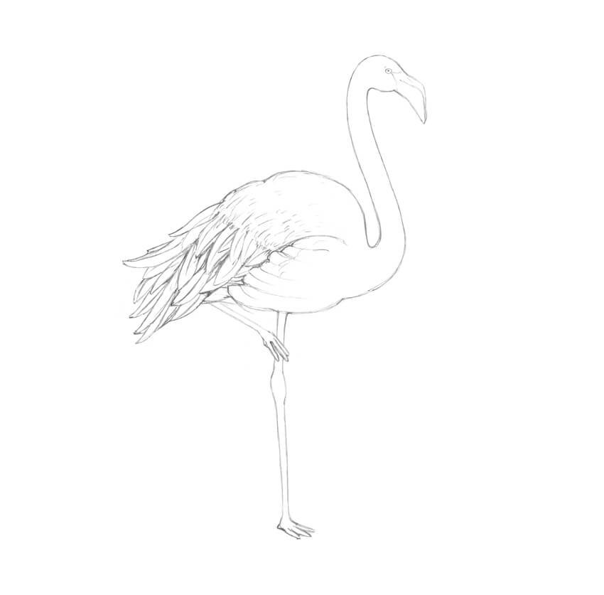 Adding the longer feathers