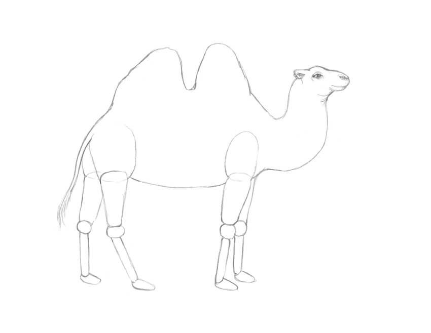 Refining the head and body of the camel
