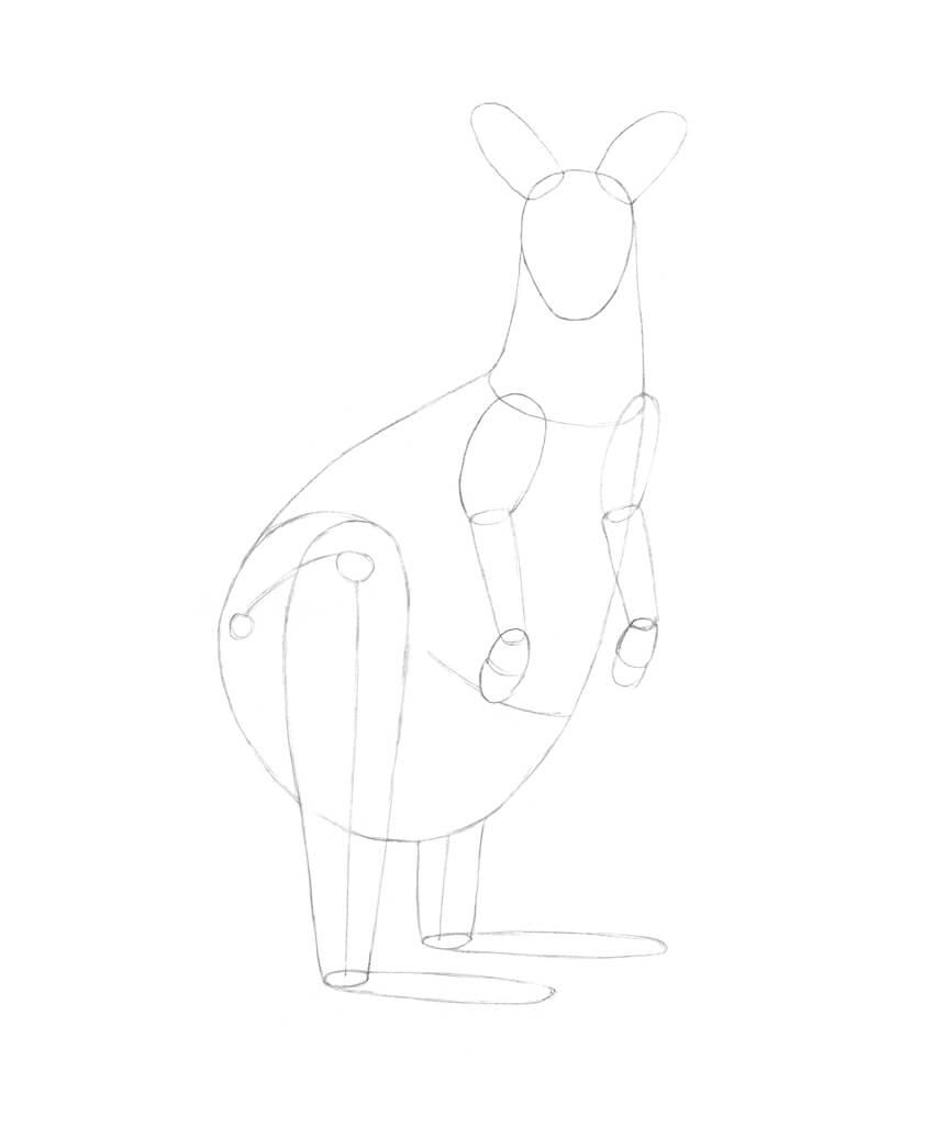 Drawing the feet of the kangaroo
