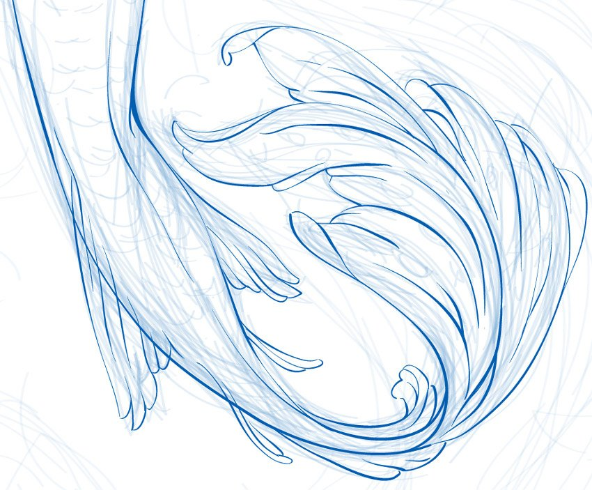 line art of the tail
