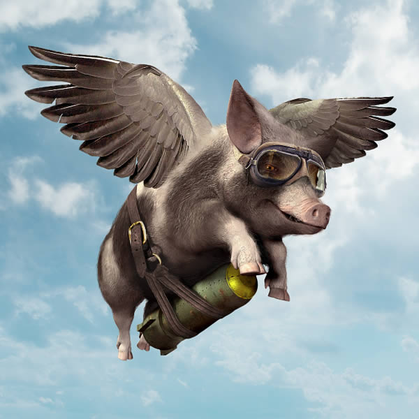 Image result for pig flying