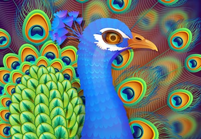Link toCreate a vibrant peacock in adobe illustrator