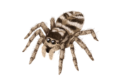 Preview for How to Draw Animals: Spiders, Popular Species, Anatomy and Movement